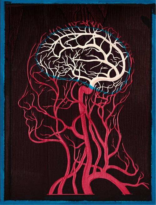 血管壁的渗透结构