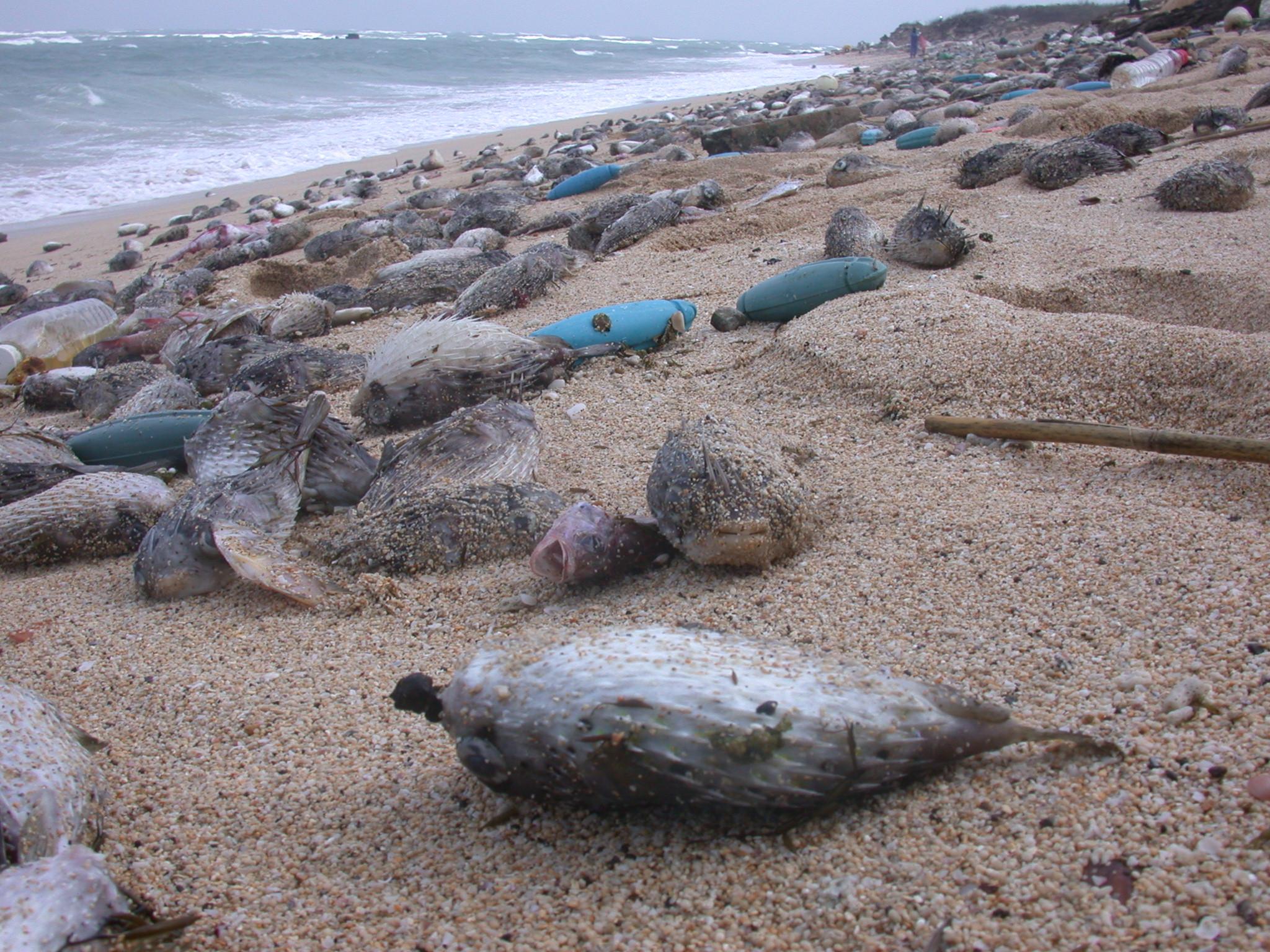 千吨的海洋生物暴死,真的只是单纯的5℃温降,或者有 更复杂的环境因素